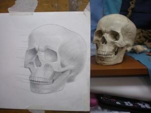 Построение черепа в трех-четвертном повороте. Компановка на листе. Профильная линия. Пропорции лицевой и мозговой частей. Наметить их границу. Перспектива. Построение парными формами.